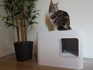 Poes Lapje op Dome